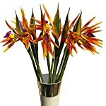Maylife-3150-Real-Touch-Bird-of-Paradise-Artificial-Flowers-Bouquet-for-Home-Garden-DecorationWedding-Party-Decor-Package-Quantity-1-Stem-Red