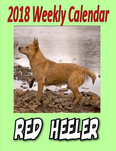 red heeler calendar - 4
