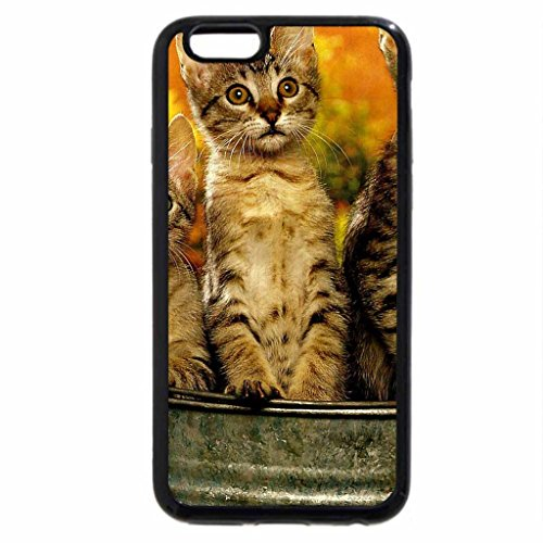iPhone 6S / iPhone 6 Case (Black) Three kittens in a pail