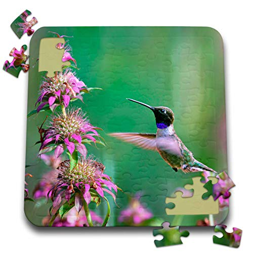 3dRose Danita Delimont - Hummingbirds - Black-chinned Hummingbird Male at bee Balm, Texas, USA.  - 10x10 Inch Puzzle ()
