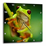 Cheap 3dRose Green Tree Frog on a Twig Wall Clock, 10 by 10-Inch