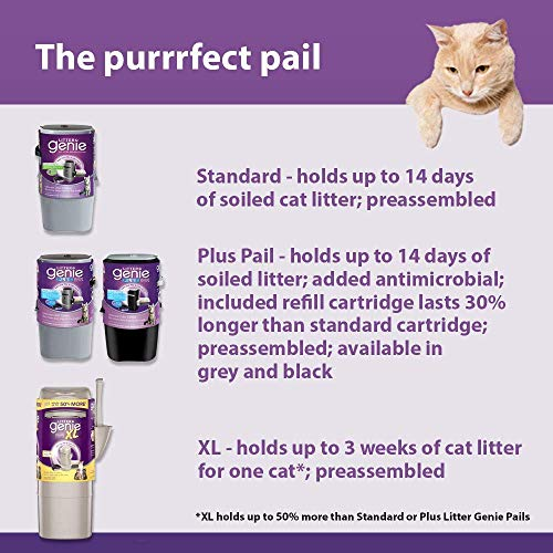 Buy what is the best brand of cat litter