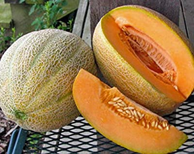 Melon, Hales Best Jumbo Cantaloupe Seeds, ORGANIC, NON-GMO, 25+ SEEDS PER PACKAGE,