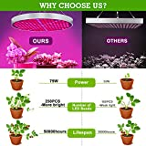 Led Grow Light, Shengsite 75W Plant Grow Lights for Indoor House Plants Full Spectrum Growing Lamp for Hydroponics,Greenhouses,Grow Tent,Plant Factory,Flower&Vegetable