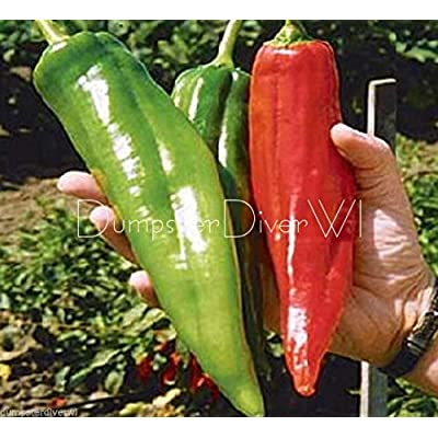 "Vegetable Seeds - 50 Seeds of Numex Big Jim 12"" Long Chiles Rellenos Pepper Mild Heat Organic Non GMO : Garden & Outdoor"