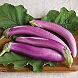 Orient Charm (F1) Eggplant Seed - ranging from light lavender to bright purple. (100 - Seeds)