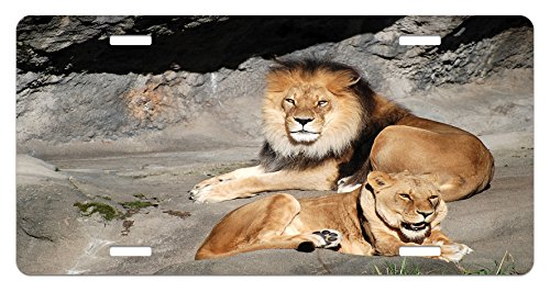 Basking Cat (Zoo License Plate by Ambesonne, Male and Female Lions Basking in the Sun Wild Cats Habitat King of Jungle, High Gloss Aluminum Novelty Plate, 5.88 L X 11.88 W Inches, Pale Brown Grey Yellow)
