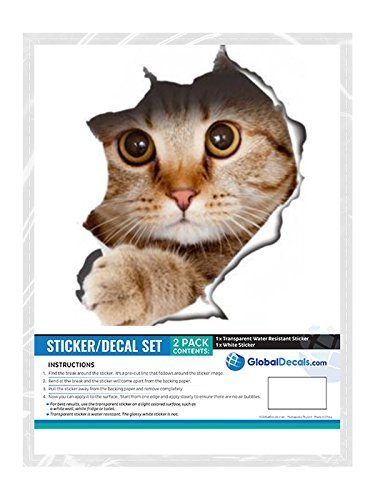 2 Confezioni Winston /& Bear Adesivi da Parete Gatto che Sbircia Vendita al Dettaglio Automobile Adesivi con Gatto 3D Camera Frigorifero Bagno