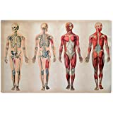 "Startonight Canvas Wall Art Body Anatomy II Learning Retro, Dual View Surprise Artwork Modern Framed Ready to Hang Wall Art 100% Original Art Painting 24"" x 36"""