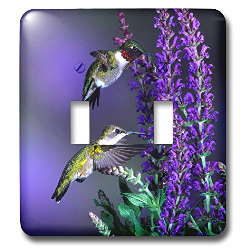 3dRose Danita Delimont - Hummingbird - Ruby-throated Hummingbirds at Lubeca Meadow Sage Salvia - Light Switch Covers - double toggle switch (lsp_250981_2) (Sage Salvia Meadow)