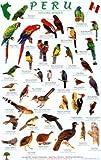 Peru Forest Bird Guide