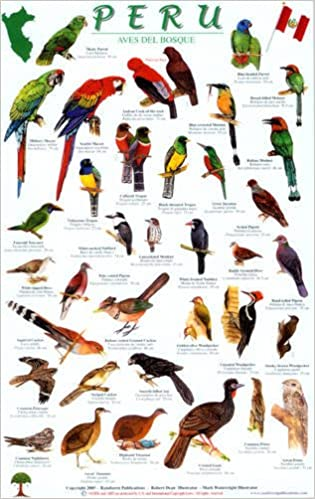 Peru Forest Bird Guide (English and Spanish Edition): Robert