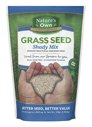 Mountain View Seeds Natures Own Shady Mix Grass Seed, (3 Lb Shady Grass Seed)