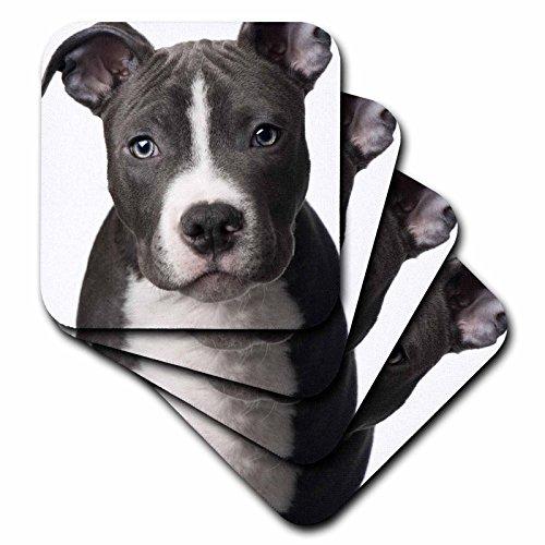 3dRose cst 4240 3 American Terrier Coasters
