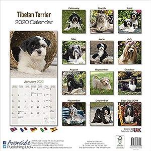 Tibetan Terrier Calendar - Dog Breed Calendars - 2019 - 2020 Wall Calendars - 16 Month by Avonside 5