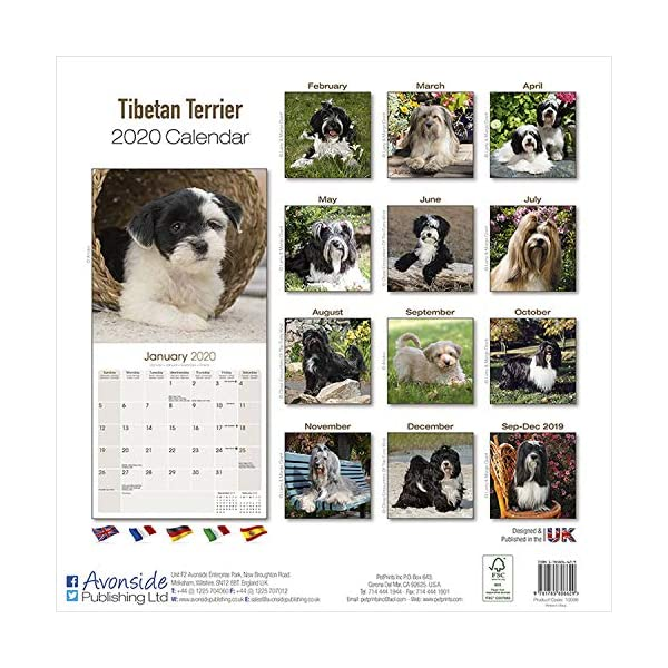 Tibetan Terrier Calendar - Dog Breed Calendars - 2019 - 2020 Wall Calendars - 16 Month by Avonside 1