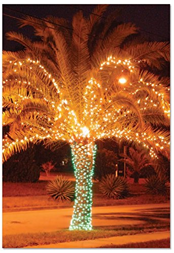 Palm Tree Holiday Card - B3273AXSG Box Set of 12 Holiday Palms Christmas Card Featuring a Palm Tree Festively Lit for The Season; with Envelopes