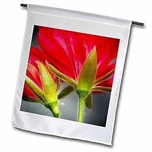 Danita Delimont–flores–Primer plano de Vining geranio de espalda de flores.–Banderas