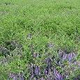 農業資材 緑肥 種子 【 へアリーベッチ 寒太郎 1kg 】土づくり 土壌改良におすすめの資材♪