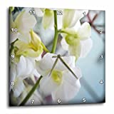 3dRose WhiteOaks Photography and Artwork - Orchid Flowers - Cluster White Orchids is a photo of a cluster of white orchids - 15x15 Wall Clock (dpp_252520_3)