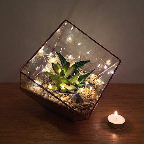 23cm High Copper Cube Terrarium Fully Assembled With Live Succulent