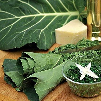 Amazon.com : Flash Collard Seeds (Hybrid) An excellent cutting green - A mild, Sweet Flavor!(100 - Seeds) : Garden & Outdoor