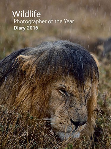 Wildlife Photographer of the Year Desk Diary 2016 (Wildlife Photographer of the Year Diaries) by Natural History Museum (2015-07-02) (Natural History Museum Photographer Of The Year 2016)