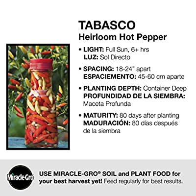 Bonnie Plants Tabasco Pepper - 4 Pack Live Plants, 1.5 - 2 Inch Fruits, 24 - 36 Inch Tall Plants, Great For Pickling & Preserving : Garden & Outdoor