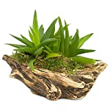 Natural Elements Log Planter (Boat) - Realistic Woodland-Themed with Intricate Weathered bark Detail + Fiber Soil + Moss Mulch. Grow Small Succulents, Cactus, African Violets. Striking in Any décor.