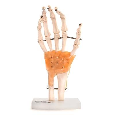 66Fit Human - Protección de mano: Industria, empresas y ciencia