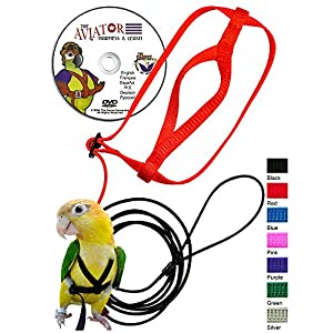 The AVIATOR Pet Bird Harness and Leash 19