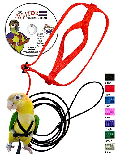 The AVIATOR Pet Bird Harness and Leash: Large Blue ()