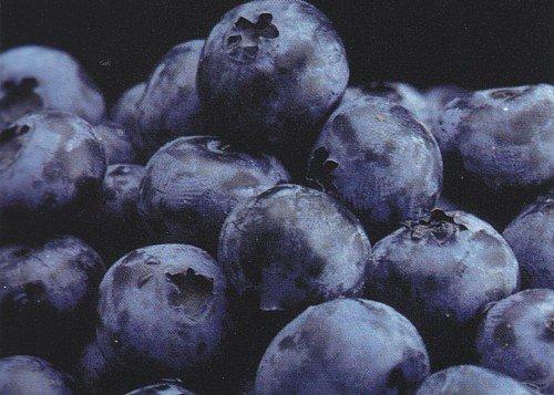 Toro Blueberry Plant - Huge Berries - Early - Self Fertile - 4