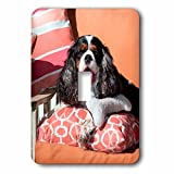 3dRose Danita Delimont - Dogs - Cavalier lying on pillows, MR - Light Switch Covers - single toggle switch (lsp_258241_1)