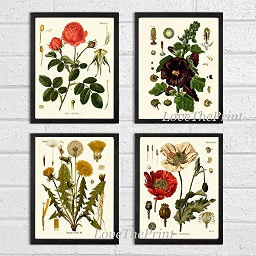 Botanical Flower Set of 4 Art Prints Antique Beautiful Red Rose Poppy Large Black Hollyhock Dandelion Spring Summer Garden Home Room Wall Decor Unframed KOH