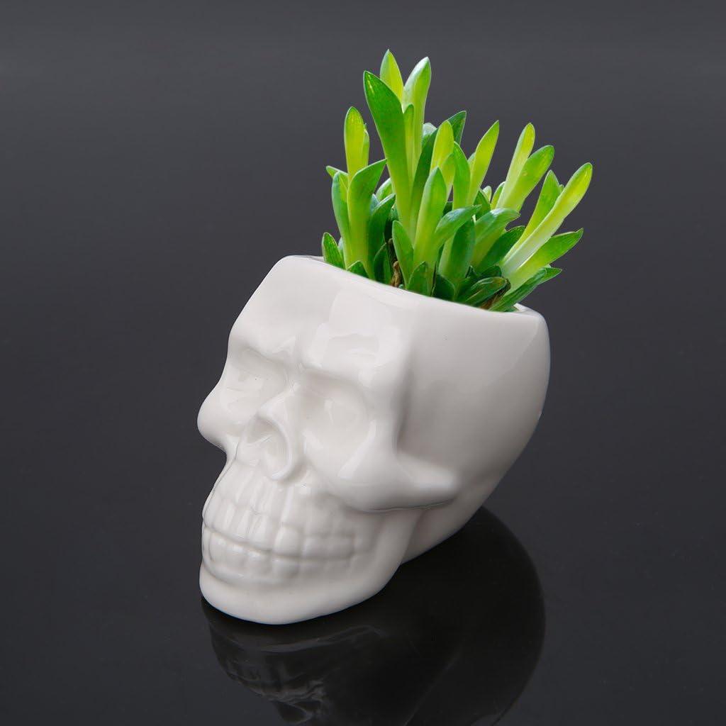 zhangcr macetero cer/ámica Verde Creativa para Plantas suculentas