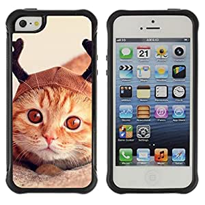 Fuerte Suave TPU GEL Caso Carcasa de Protección Funda para Apple Iphone 5 / 5S / Business Style Selkirk American Shorthair Orange