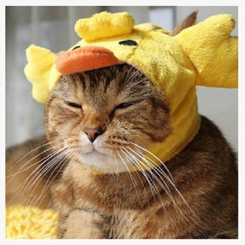 [AUCH New/Cute Fashion Colorful Pet Dog/Cat Hat Classics Collection Pet Costume for Christmas Festival,Duck] (Duck Costumes For Dog)