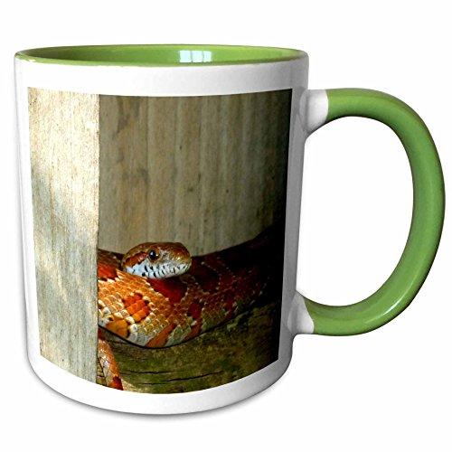 3dRose Susans Zoo Crew Animals Reptile - red rat snake side head sq - 15oz Two-Tone Green Mug (mug_156087_12) ()