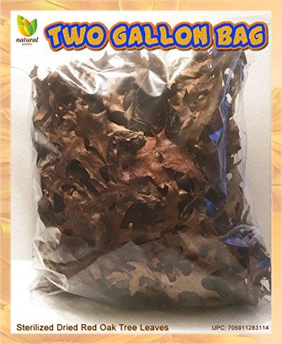Red Oak Hand Picked Steamed & Dried Leaves For Terrarium-Vivarium-Insect Habitat