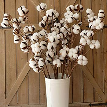 idyllic Pack of 6 Cotton Stems - 31 Inches Tall - 12 Cotton Bolls Per Stem Real Elastic Cotton Stalk Rustic Floral for Home Decor Wedding Centerpiece Farmhouse Style