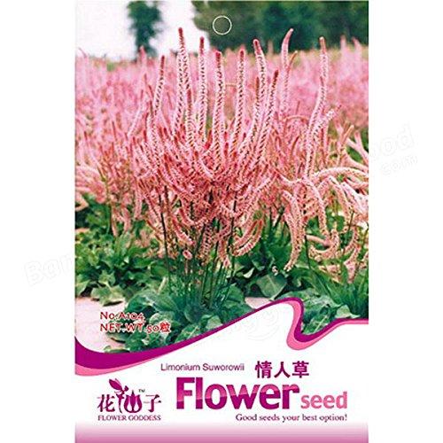 Calli 60pcs rose limonium semences de statice graines de fleurs romantique