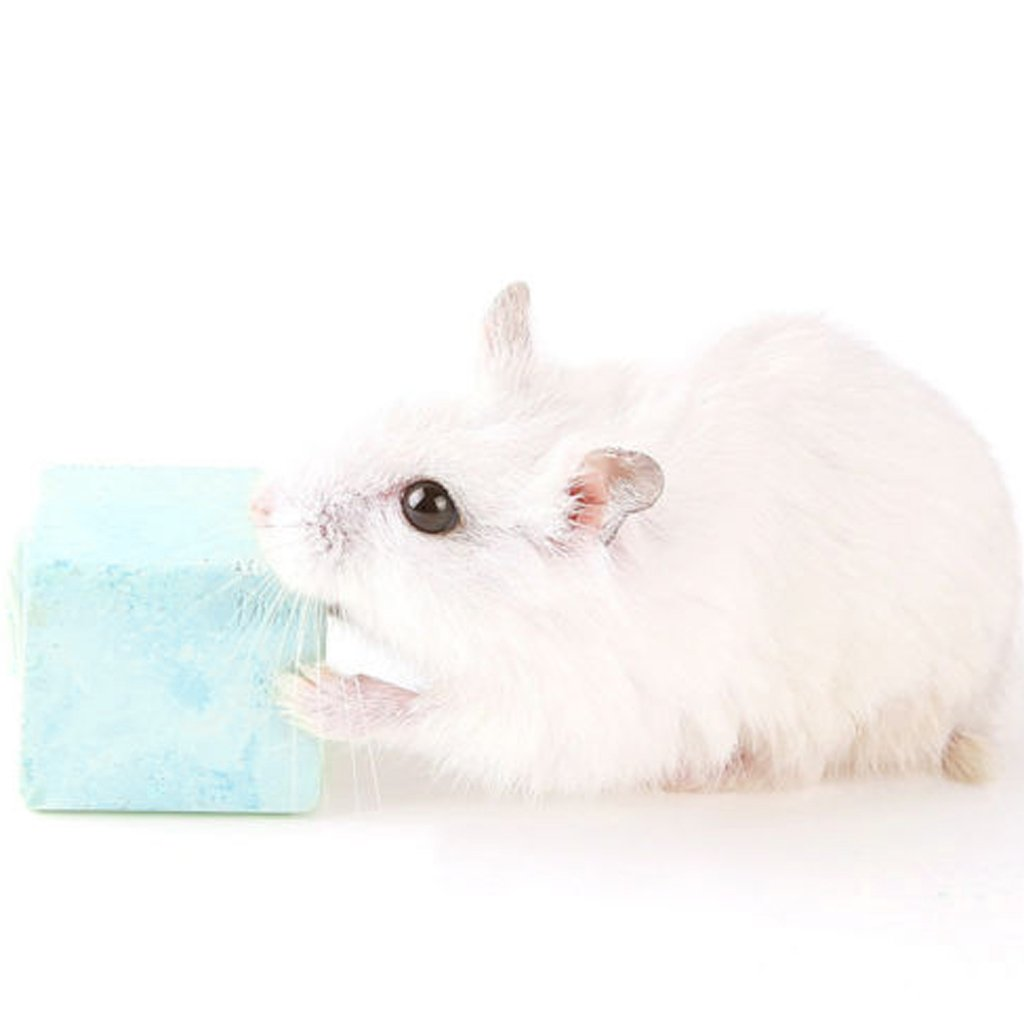 Mentin Bird/Dog/Cat Pet Training Chewing Pet Teeth Stone Mineral Hamster