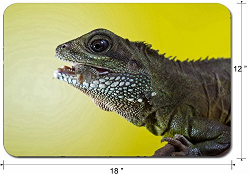 Liili Large Mouse Pad XL Extended Non-Slip Rubber Extra Large Gaming Mousepad, 3mm thick Desk Mat 18x12 Inch Close up portrait of beautiful water dragon lizard reptile eating an insect Photo 19504434
