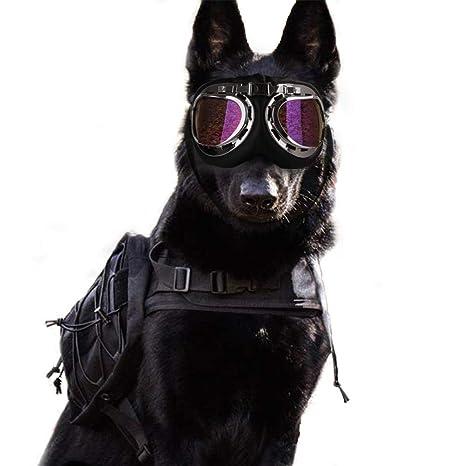 Hook.s. Gafas innovadoras para Perros, Gafas de Sol para ...