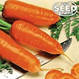buy Chantenay Red Core Carrot Seeds - 250 Seeds Non-GMO now, new 2019-2018 bestseller, review and Photo, best price
