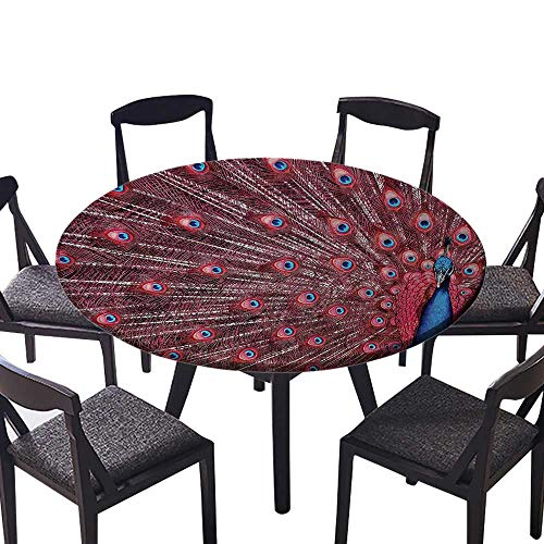 Picnic Circle Table Cloths Male Peacock Displays His Plumage Majestic Surreal Wildlife Theme or Everyday Dinner, Parties 50