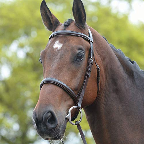 Kincade Raised Cavesson Snaffle Bridle Full Size ()