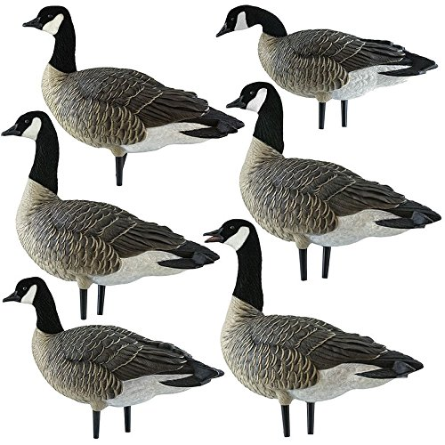 - Avian-X Painted Active Lesser Goose Decoys 6 Pack
