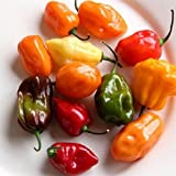 buy David's Garden Seeds Pepper Hot Habanero Rainbow Mix SL163 (Multi) 50 Open Pollinated Seeds now, new 2018-2017 bestseller, review and Photo, best price $8.45